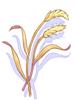 Bag of Grain