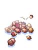 Pile Of Acorn