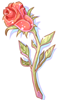 Witherless Rose